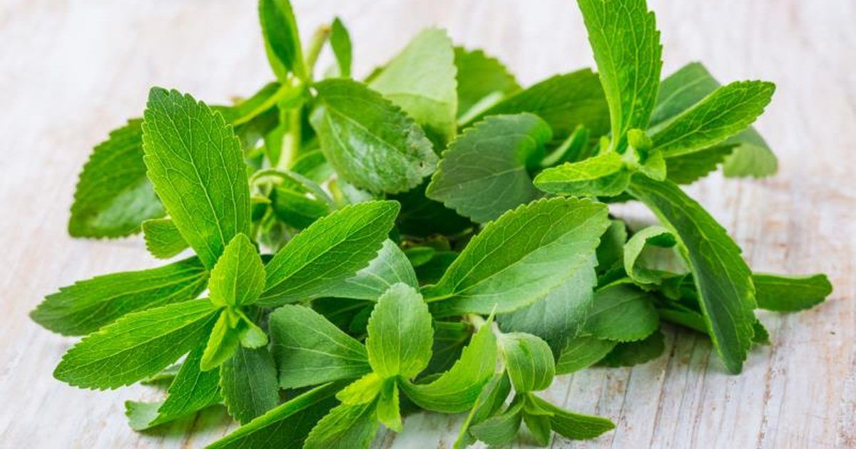 stevia indulcitor natural