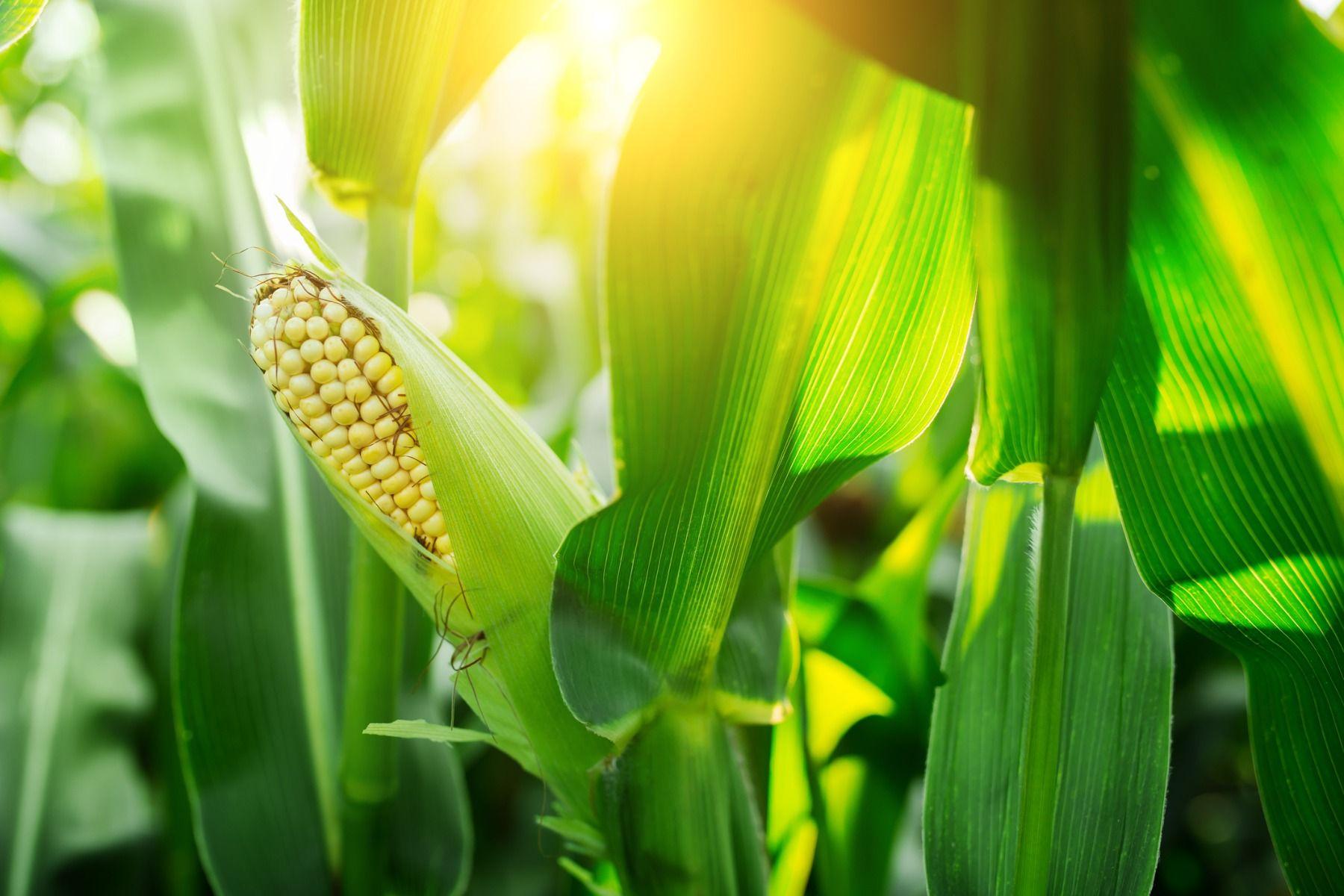 DAA și sursele hrană în care poate fi găsit